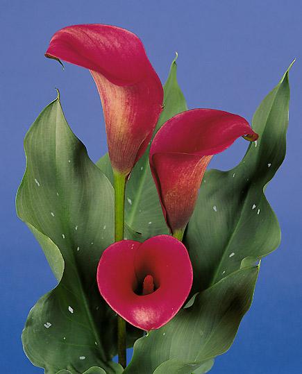 Arte floreale milano fiori scuola fioristi bouquet addobbi for Calle colorate non fioriscono
