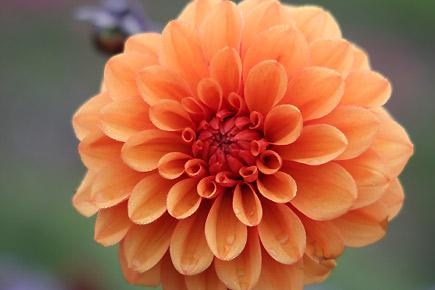 Arte floreale milano fiori scuola fioristi bouquet addobbi for Tipi di fiori