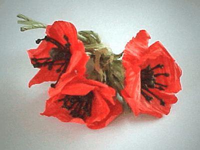 http://www.artefloreale.com/twistart/fiori_filomacro/images/papavero/papavero1.jpg