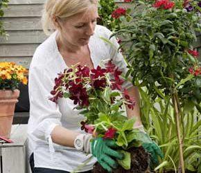 Come diventare fiorista e aprire un negozio di fiori – 2° modulo